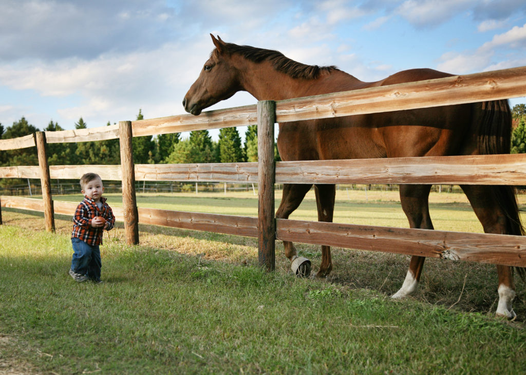 Horse and child at a family session