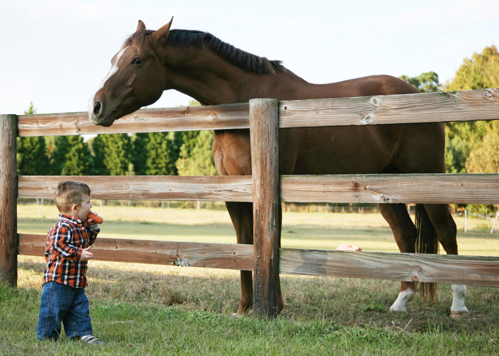 child holding carrot and horse watching