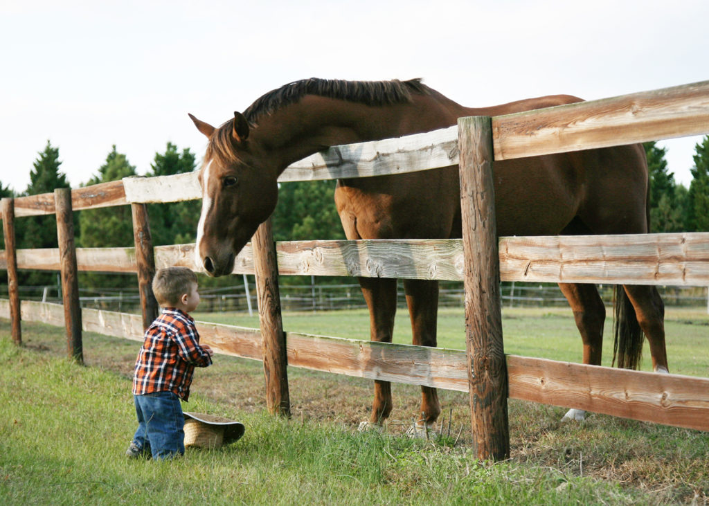 horse and child looking at one another