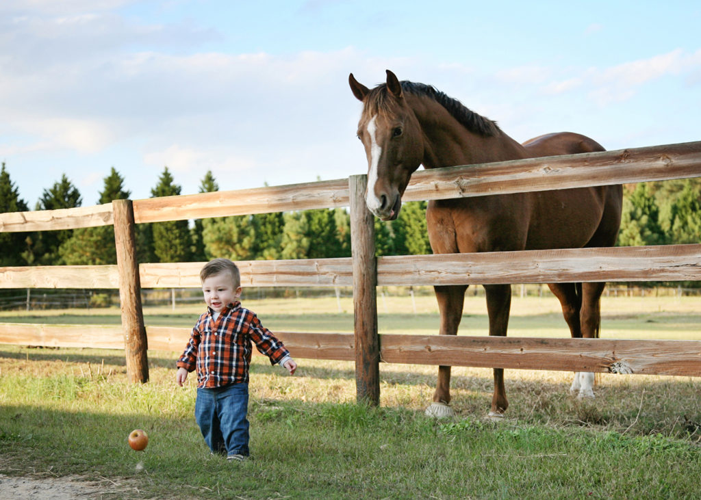 Horse and baby at a family session