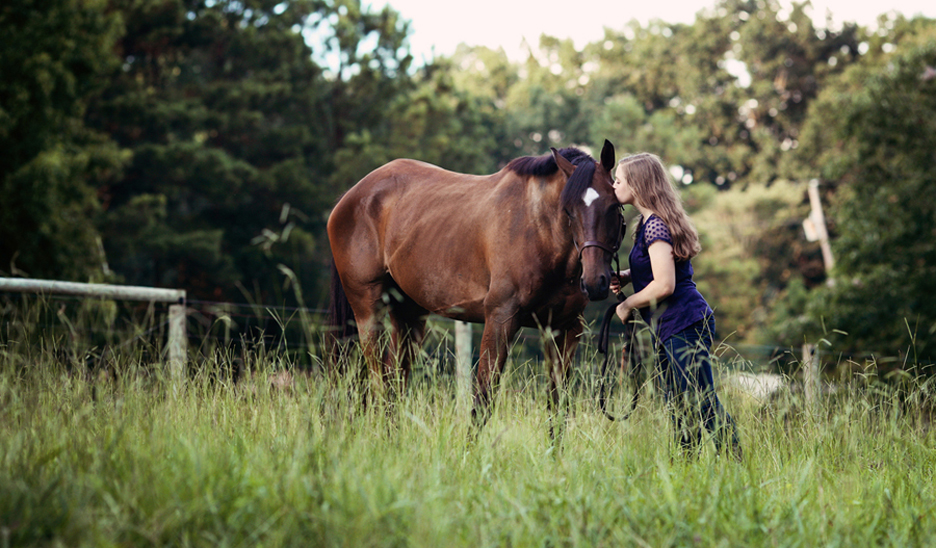 Raleigh horse photography